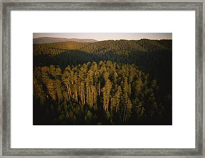 Afternoon Sunlight Bathes Redwood Trees Framed Print by James P. Blair