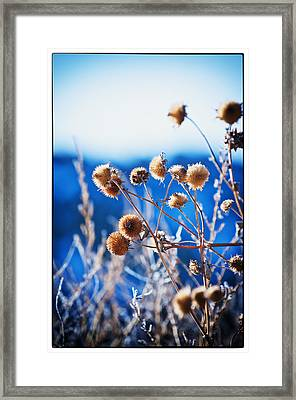 Against The  Blue Sky Framed Print by Lisa  Spencer