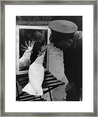 Aged Cocky Framed Print by Fox Photos