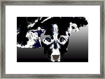 Akita Chow Framed Print by One Rude Dawg Orcutt
