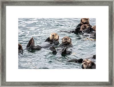 Alaskan Sea Otters Framed Print by Josh Whalen