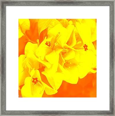 Ali Orange Framed Print by Keren Shiker