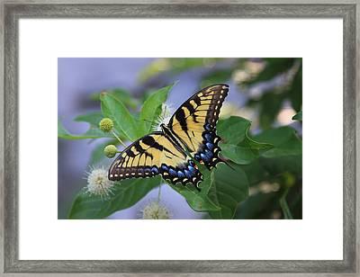 Alight Framed Print by Shari Jardina