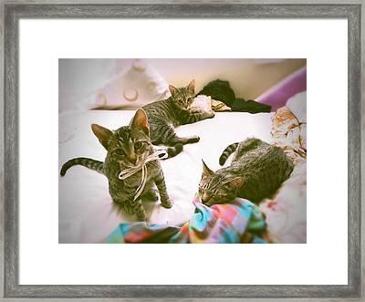 All 3 Kittens Together  Framed Print by Gemma Geluz