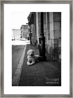 All Alone Framed Print by Leslie Leda