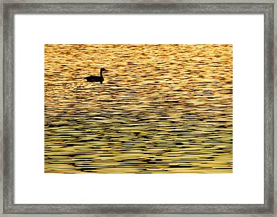 All By My Self Framed Print by James Steele