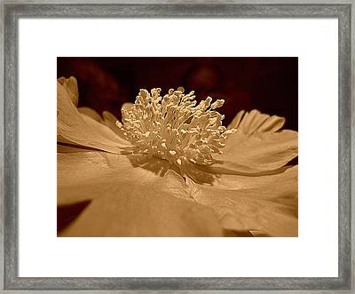 All My Glory Framed Print by Shirley Sirois