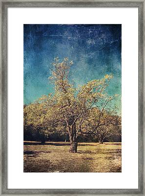All That's Unknown Framed Print by Laurie Search
