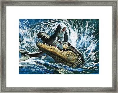 Alligator Eating Fish Framed Print by English School