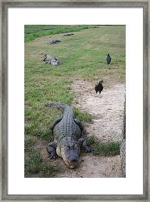 Alligator Train Framed Print by Erik Hovind