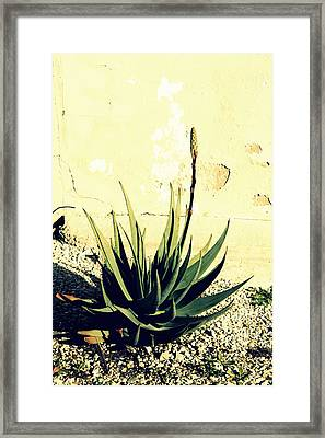 Aloe Framed Print by Laurel Heritage