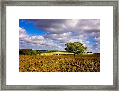 Alone On The Field  Framed Print by Radoslav Toth