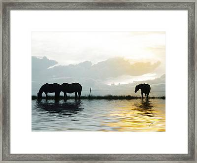 Alone Framed Print by Susan Kinney