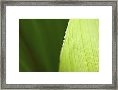 Along The Edge Framed Print by Rich Franco