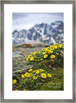 Alpine Meadow  Framed Print by Elena Elisseeva