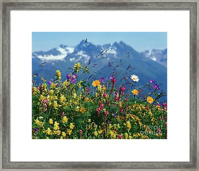 Alpine Wildflowers Framed Print by Hermann Eisenbeiss and Photo Researchers