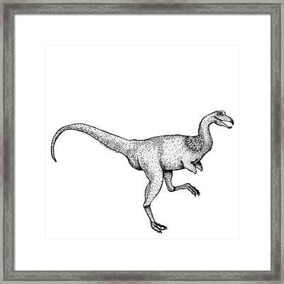Alvarezsaurus - Dinosaur Framed Print by Karl Addison