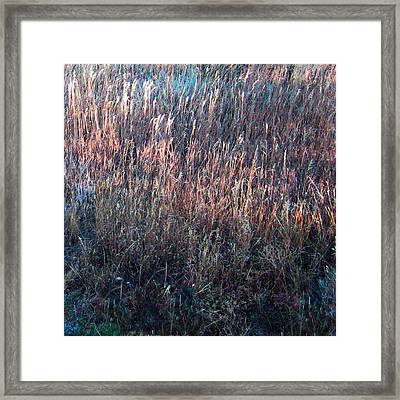 Amazing Grass Two Framed Print by Ric Soulen