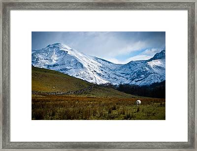 Amazing Grazing Framed Print by Chris Boulton