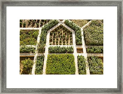 Amber Fort Garden Framed Print by Inti St. Clair
