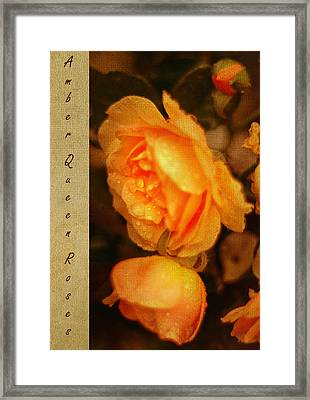 Amber Queen Rose Framed Print by Jenny Rainbow
