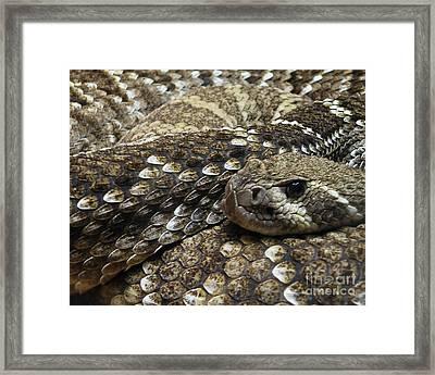 Ambush Framed Print by Joe Jake Pratt