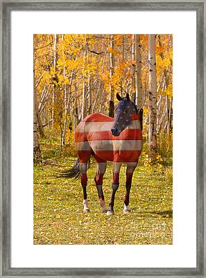 American Bred Framed Print by James BO  Insogna