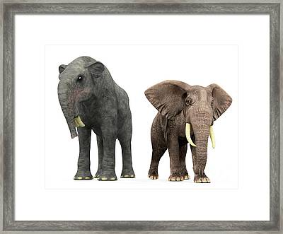 An Adult Deinotherium Compared Framed Print by Walter Myers