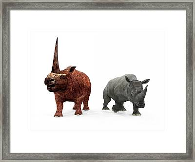 An Adult Elasmotherium Compared Framed Print by Walter Myers