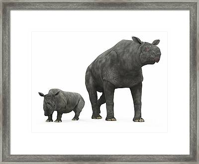 An Adult Paraceratherium Compared Framed Print by Walter Myers