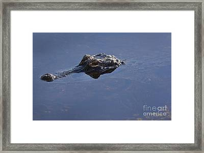 An Alligator Peeks Its Head Framed Print by Terry Moore
