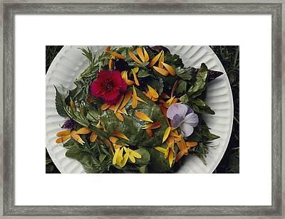 An Edible Salad At The Tilth Harvest Framed Print by Sam Abell