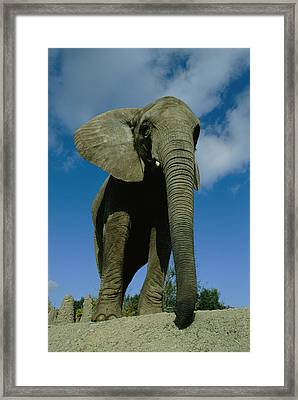 An Elephant At The Pittsburgh Zoo. This Framed Print by Michael Nichols