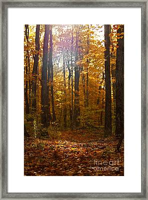 An Inspired Stroll Through The Forest Framed Print by Inspired Nature Photography Fine Art Photography