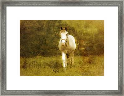 Andre On The Farm Framed Print by Trish Tritz