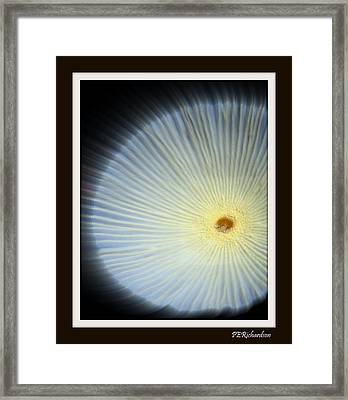 Andromeda Framed Print by Priscilla Richardson