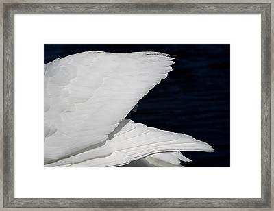 Angel Wings Framed Print by Paulette Thomas