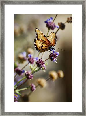 Angel Wings  Framed Print by Saija  Lehtonen