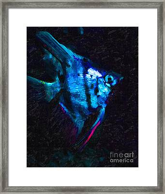 Angelfish Framed Print by Wingsdomain Art and Photography