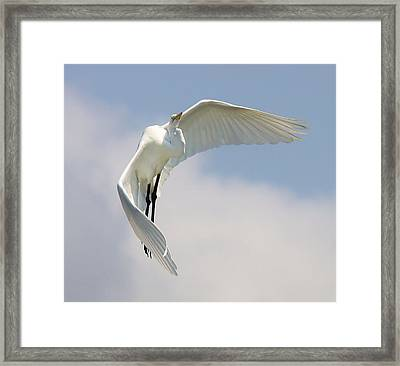 Angelic Framed Print by Paulette Thomas