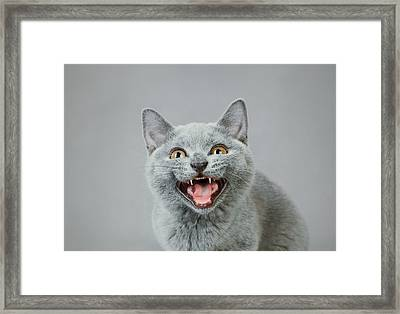 Angry Kitten Framed Print by Waldek Dabrowski