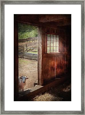 Animal - Lamb - Hello Anybody Home Framed Print by Mike Savad