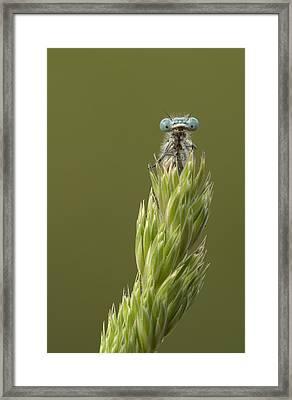 Animal Framed Print by Andy Astbury