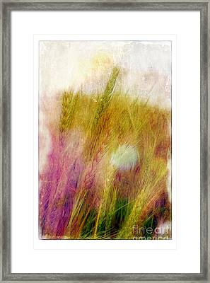 Another Field Of Dreams Framed Print by Judi Bagwell