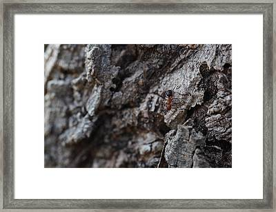 Ant Framed Print by Pan Orsatti