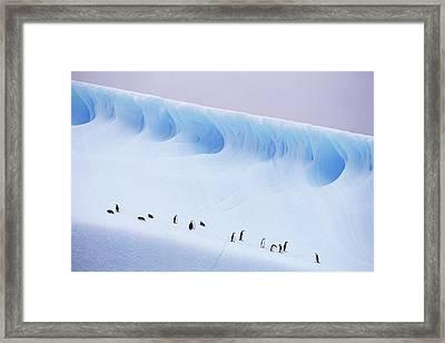Antarctica, South Orkney Islands, Chinstrap Penguins On Iceberg Framed Print by Kevin Schafer