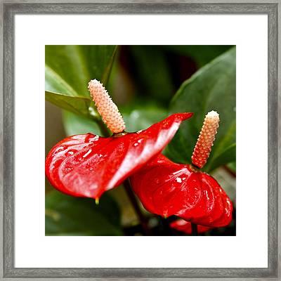 Anthurium In Red Framed Print by Karon Melillo DeVega