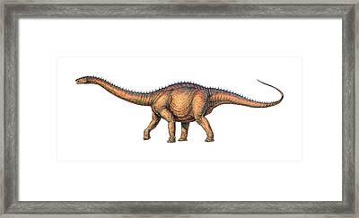 Apatosaurus Dinosaur Framed Print by Joe Tucciarone