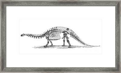 Apatosaurus Excelsus,  Aka Brontosaurus Framed Print by Science Source