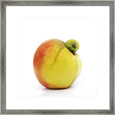 Apple With An Excrescence Framed Print by Bernard Jaubert